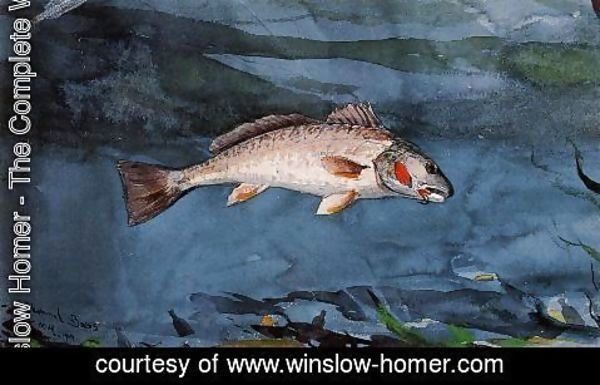 Winslow Homer - Channel Bass