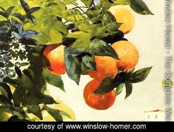 Winslow Homer - Oranges on a Branch