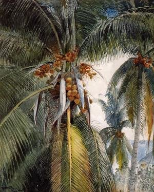 Winslow Homer - Coconut Palms, Key West