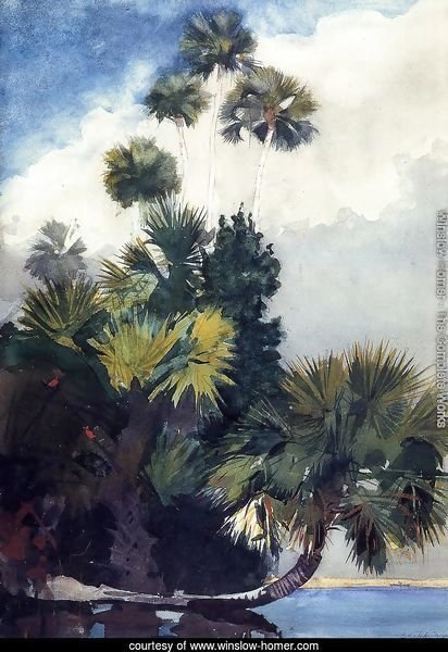 Palm Trees, Florida