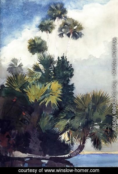 Winslow Homer - Palm Trees, Florida