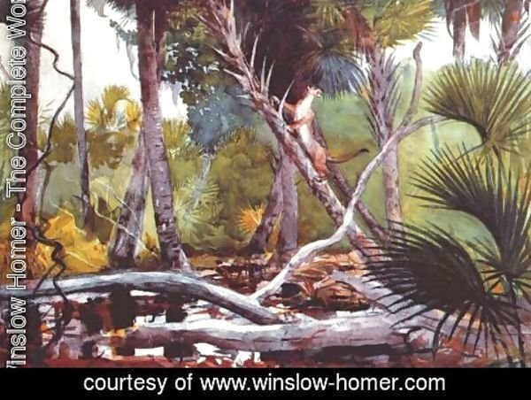 Winslow Homer - In the jungle, Florida