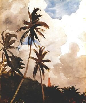 Palm trees (Bahamas)